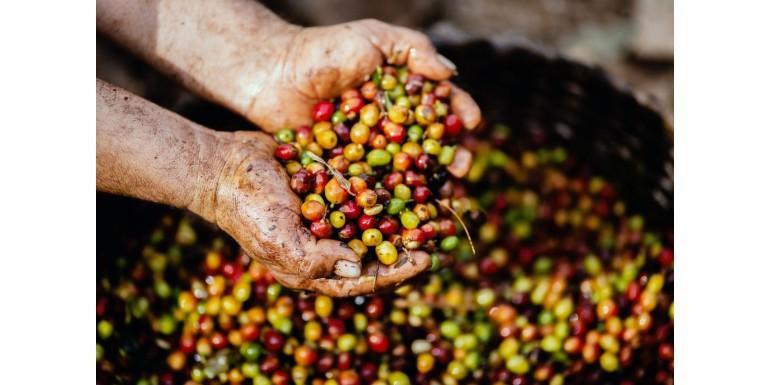 Na czym polegają różne obróbki kawy?